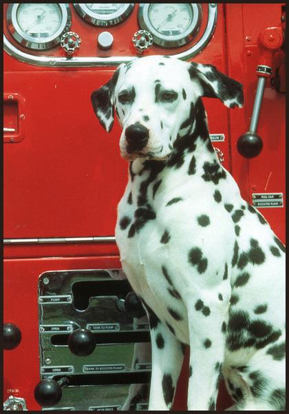 Fire dog